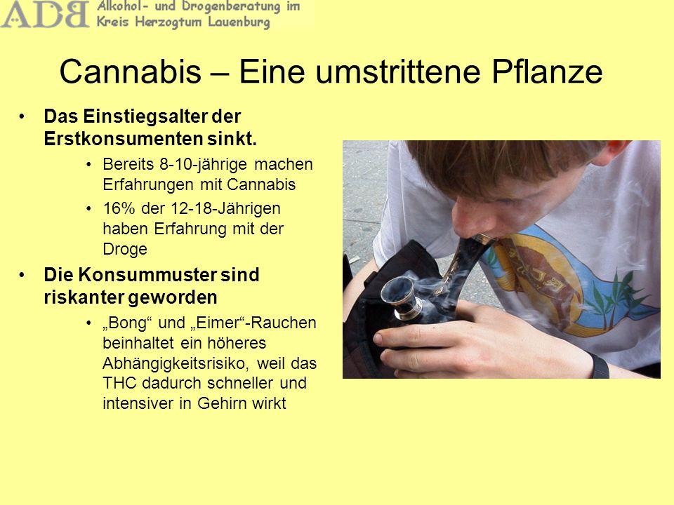 Das Einstiegsalter der Erstkonsumenten sinkt. Bereits 8-10-jährige machen Erfahrungen mit Cannabis 16% der 12-18-Jährigen haben Erfahrung mit der Drog