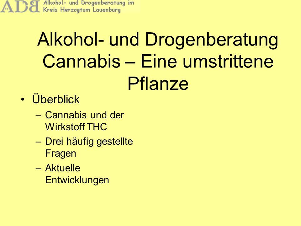 Alkohol- und Drogenberatung Cannabis – Eine umstrittene Pflanze Überblick –Cannabis und der Wirkstoff THC –Drei häufig gestellte Fragen –Aktuelle Entw