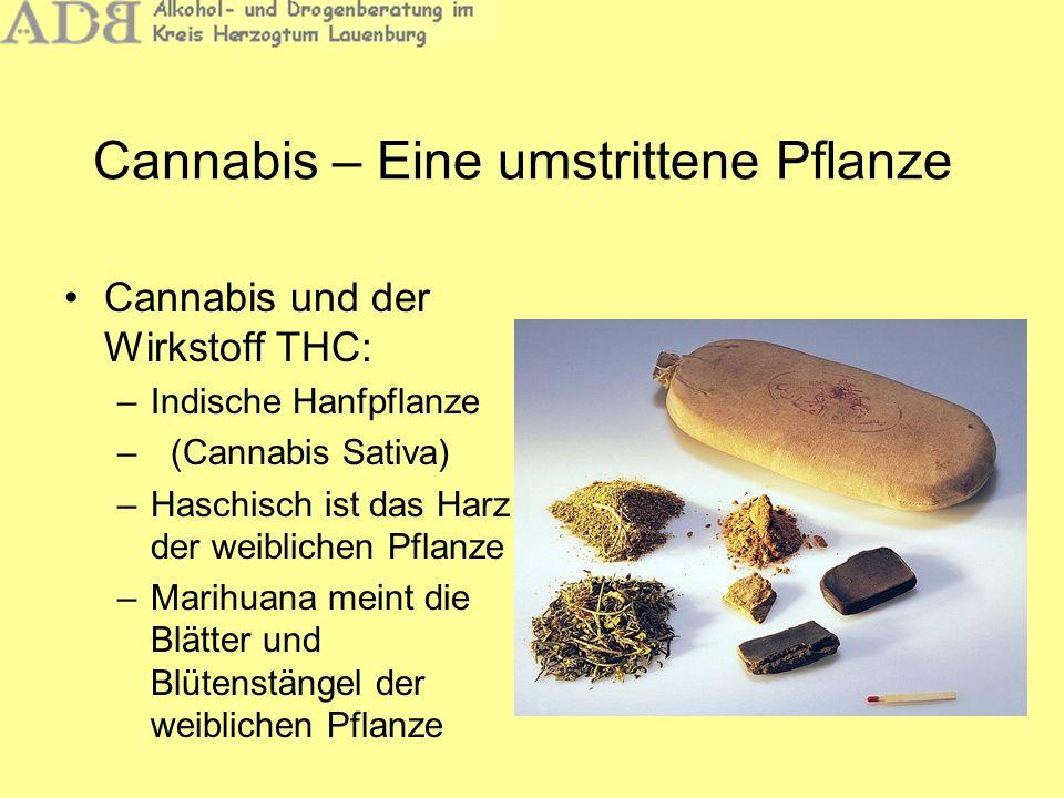 Cannabis – Eine umstrittene Pflanze Cannabis und der Wirkstoff THC: –Indische Hanfpflanze –(Cannabis Sativa) –Haschisch ist das Harz der weiblichen Pf