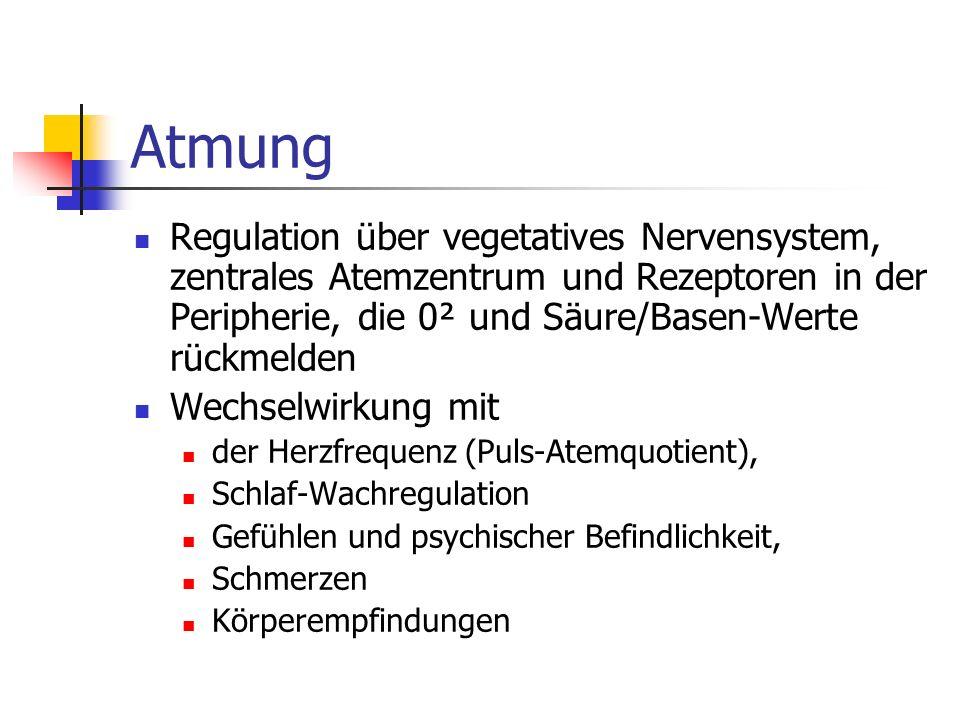 Atmung Regulation über vegetatives Nervensystem, zentrales Atemzentrum und Rezeptoren in der Peripherie, die 0² und Säure/Basen-Werte rückmelden Wechs