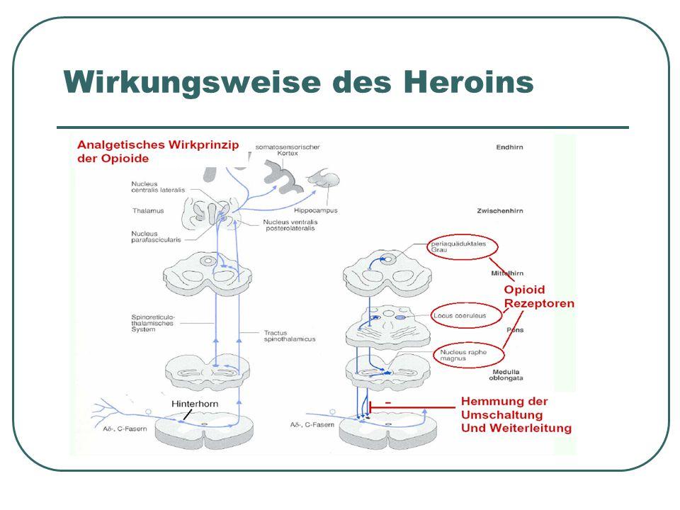 drei Rezeptoren für Opiate: μ, δ, κ Heroin bindet v.a.