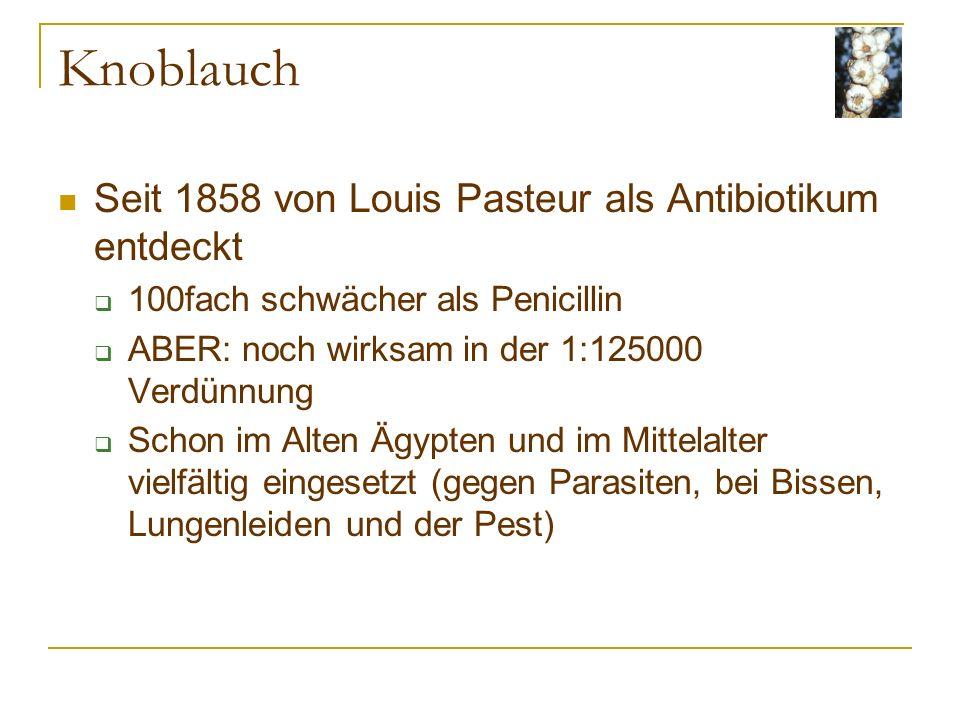 Knoblauch Seit 1858 von Louis Pasteur als Antibiotikum entdeckt 100fach schwächer als Penicillin ABER: noch wirksam in der 1:125000 Verdünnung Schon im Alten Ägypten und im Mittelalter vielfältig eingesetzt (gegen Parasiten, bei Bissen, Lungenleiden und der Pest)