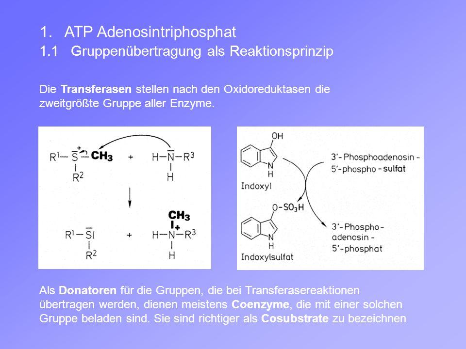 Die Transferasen stellen nach den Oxidoreduktasen die zweitgrößte Gruppe aller Enzyme.