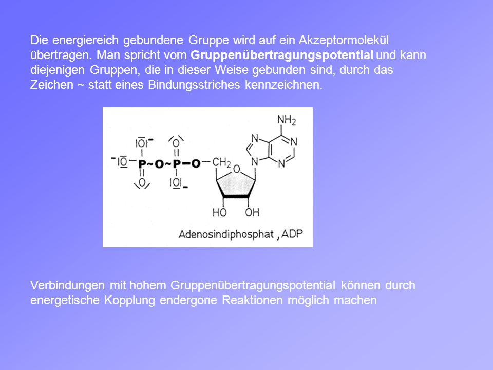 Verbindungen mit hohem Gruppenübertragungspotential können durch energetische Kopplung endergone Reaktionen möglich machen Die energiereich gebundene Gruppe wird auf ein Akzeptormolekül übertragen.