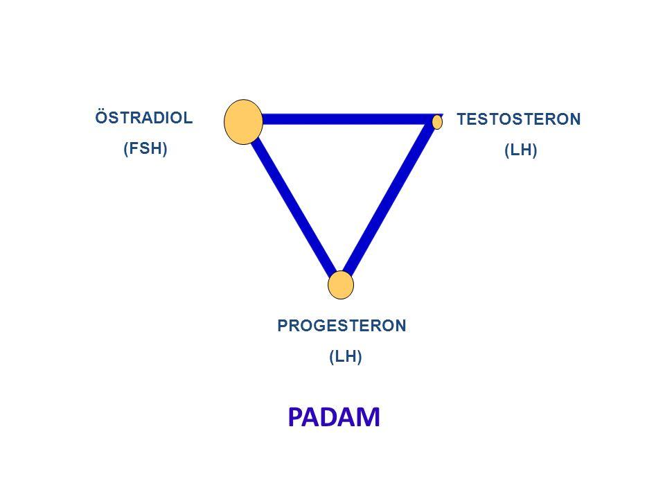 PROGESTERON (LH) TESTOSTERON (LH) ÖSTRADIOL (FSH) PADAM
