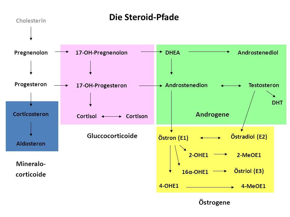 Cholesterin Die Steroid-Pfade Pregnenolon Progesteron Mineralo- corticoide Östrogene Gluccocorticoide Corticosteron Aldosteron 17-OH-Pregnenolon 17-OH