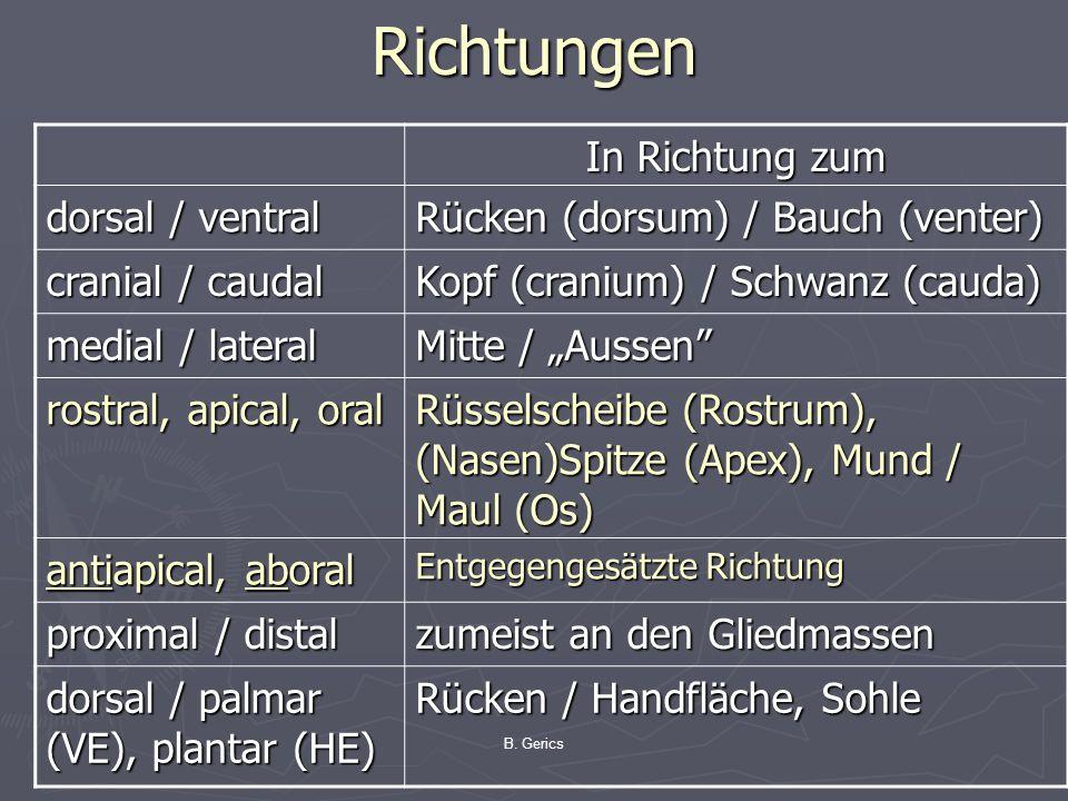 B. Gerics Richtungen In Richtung zum dorsal / ventral Rücken (dorsum) / Bauch (venter) cranial / caudal Kopf (cranium) / Schwanz (cauda) medial / late
