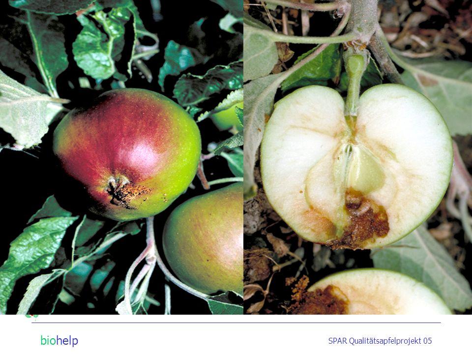 biohelp SPAR Qualitätsapfelprojekt 05 Strategien im Obstbau Apfelwickler Entwicklungszyklus Bekämpfungsmöglichkeiten? Pheromonfallen Verwirrungstechni
