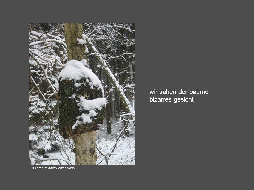 … die stämme gegen den wind weiß beschuppt … © Foto: Reinhild Schlör-Vogel
