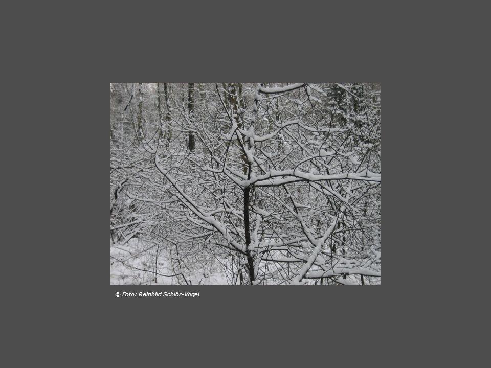 … der wald war tief verschneit doch die wege zertreten immer wieder blieben wir staunend stehn als sähn wir die bäume heute zum ersten mal und du fingst den zauber mit der Kamera ein © Foto: Reinhild Schlör-Vogel