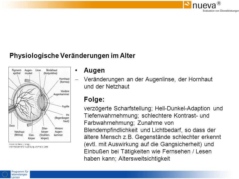 Physiologische Veränderungen im Alter Augen Veränderungen an der Augenlinse, der Hornhaut und der Netzhaut Folge: verzögerte Scharfstellung; Hell-Dunk