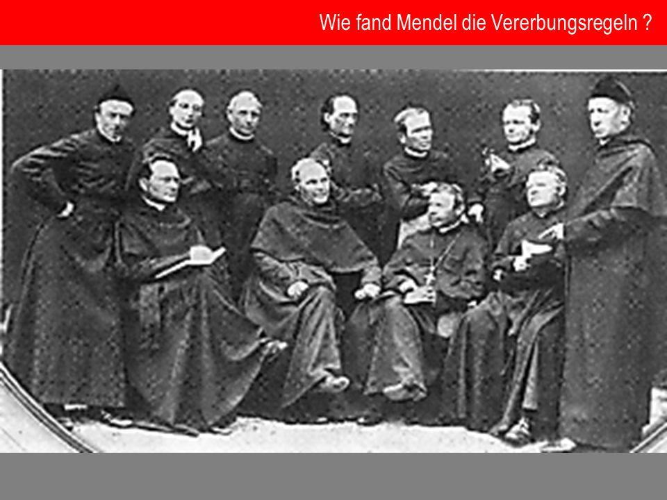 Wie fand Mendel die Vererbungsregeln ?