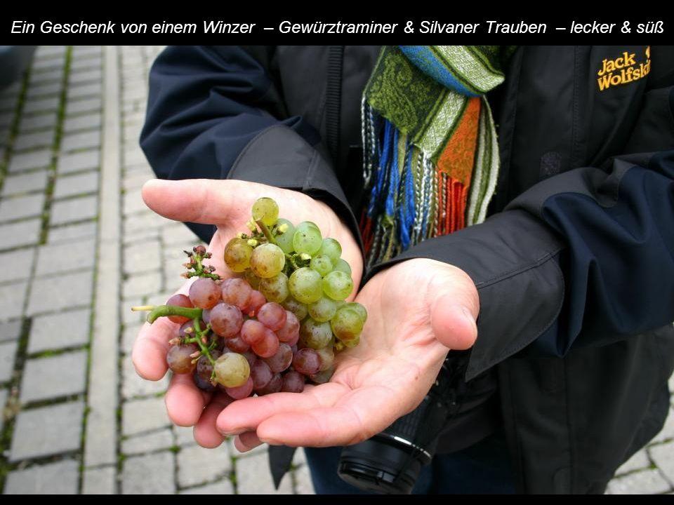 Ein Geschenk von einem Winzer – Gewürztraminer & Silvaner Trauben – lecker & süß