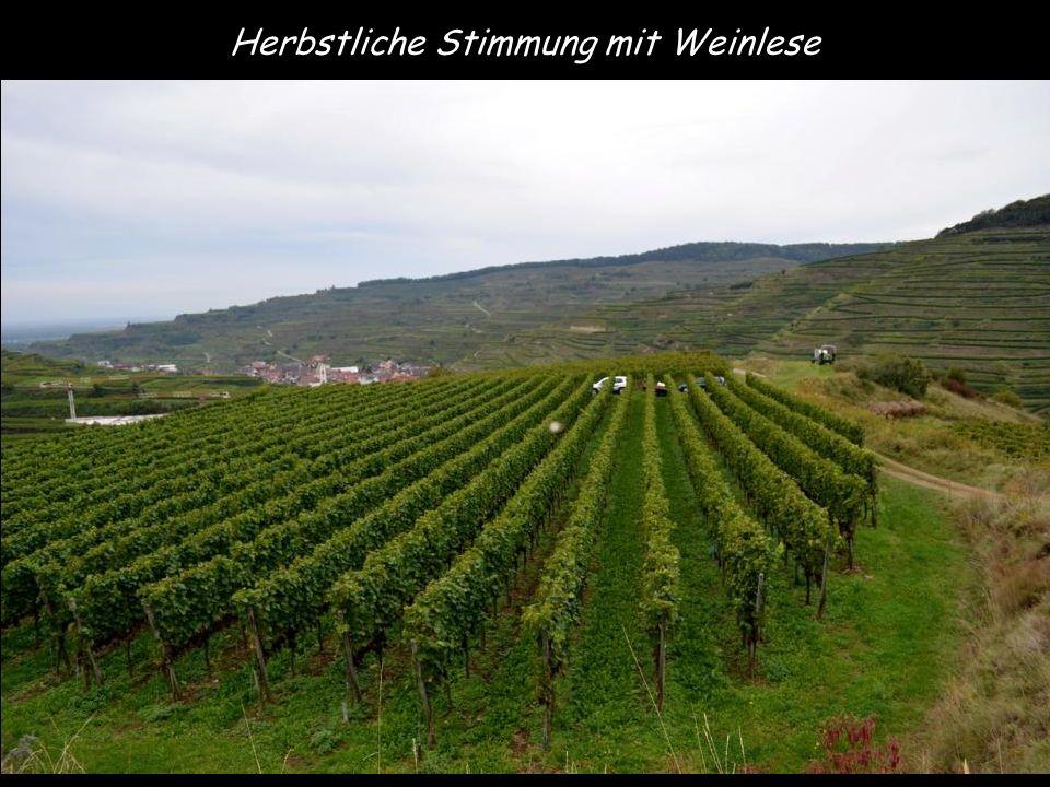 Herbstliche Stimmung mit Weinlese