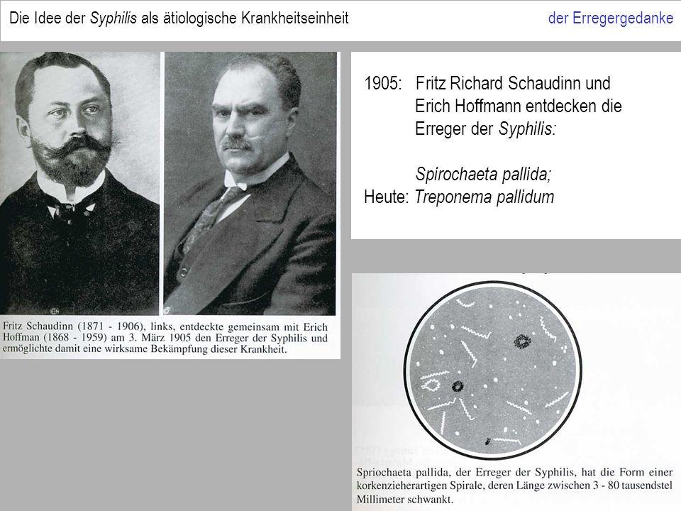 1905: Fritz Richard Schaudinn und Erich Hoffmann entdecken die Erreger der Syphilis: Spirochaeta pallida; Heute: Treponema pallidum Die Idee der Syphilis als ätiologische Krankheitseinheit der Erregergedanke