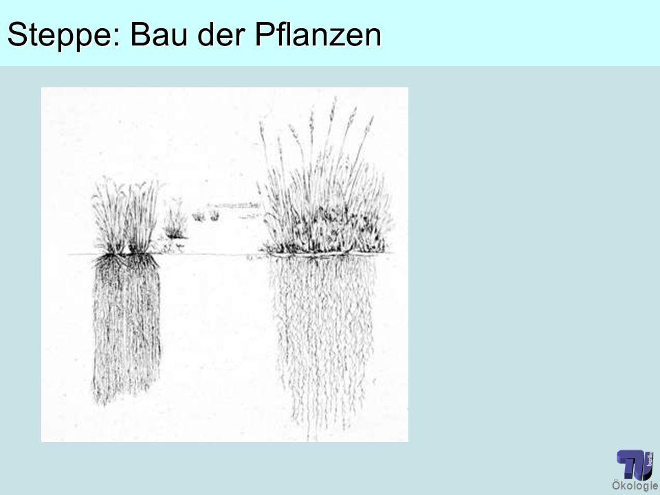 Ökologie Steppe: Bau der Pflanzen