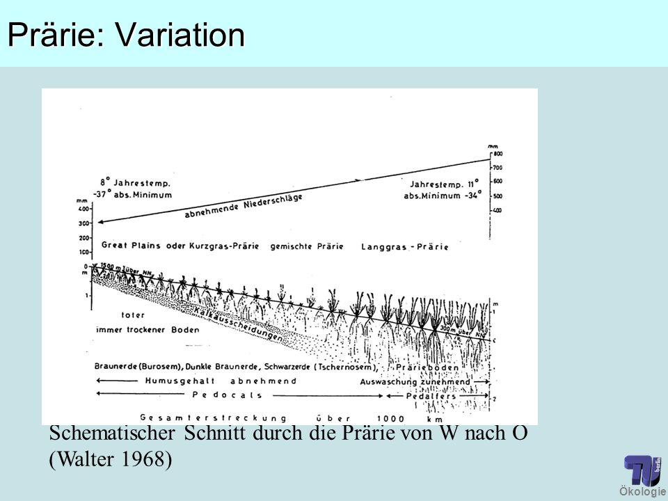 Ökologie Prärie: Variation Schematischer Schnitt durch die Prärie von W nach O (Walter 1968)