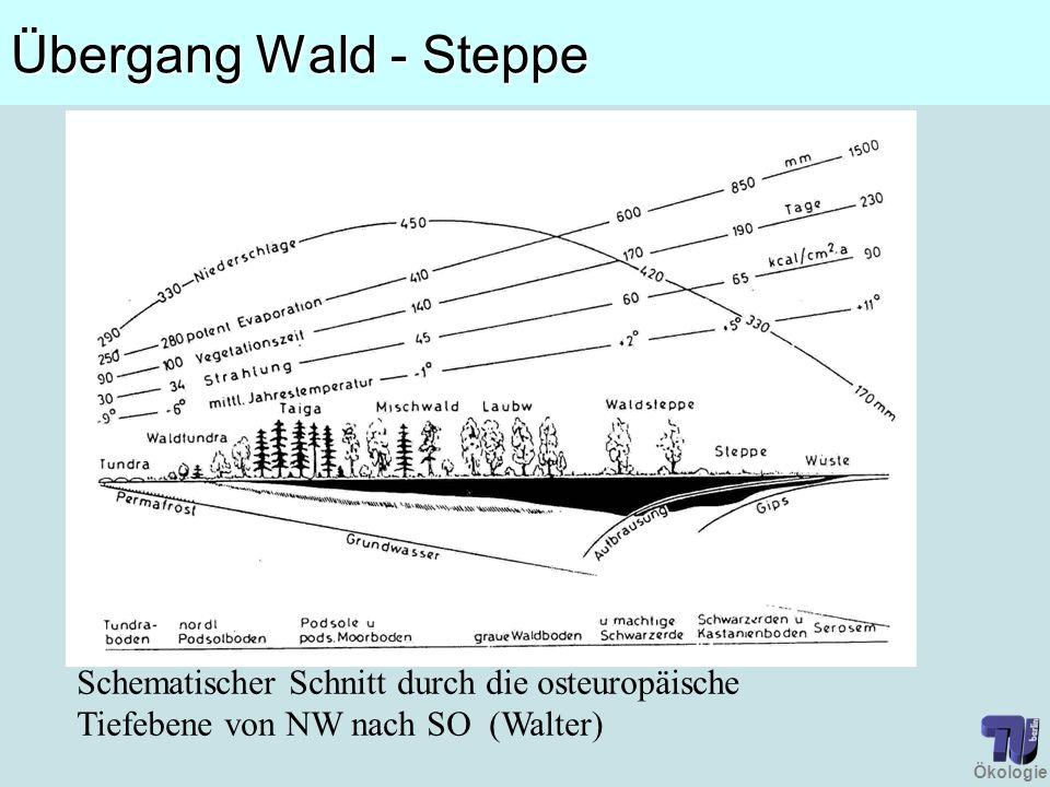 Ökologie Übergang Wald - Steppe Schematischer Schnitt durch die osteuropäische Tiefebene von NW nach SO (Walter)