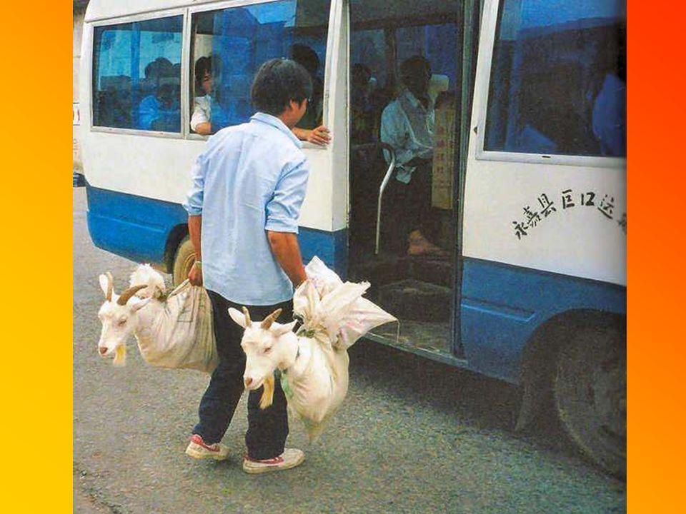 In den öffentlichen Verkehrsmittel war immer Platz für Zusteiger