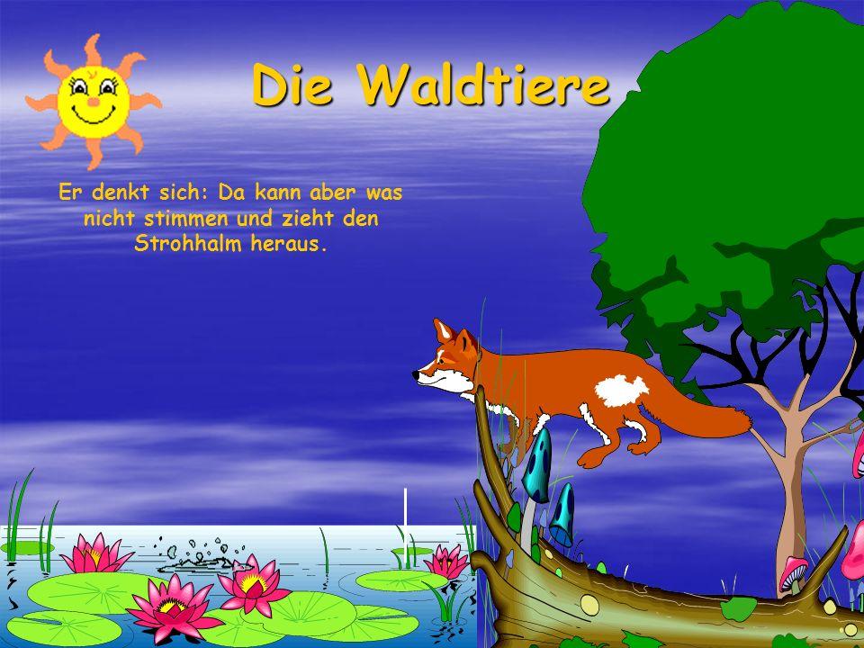 Die Waldtiere Da kommt er zu einem Teich. Da sieht er ein kleines Stöckchen von einem Strohhalm herausstehen und immer im Kreis herumschwimmen.