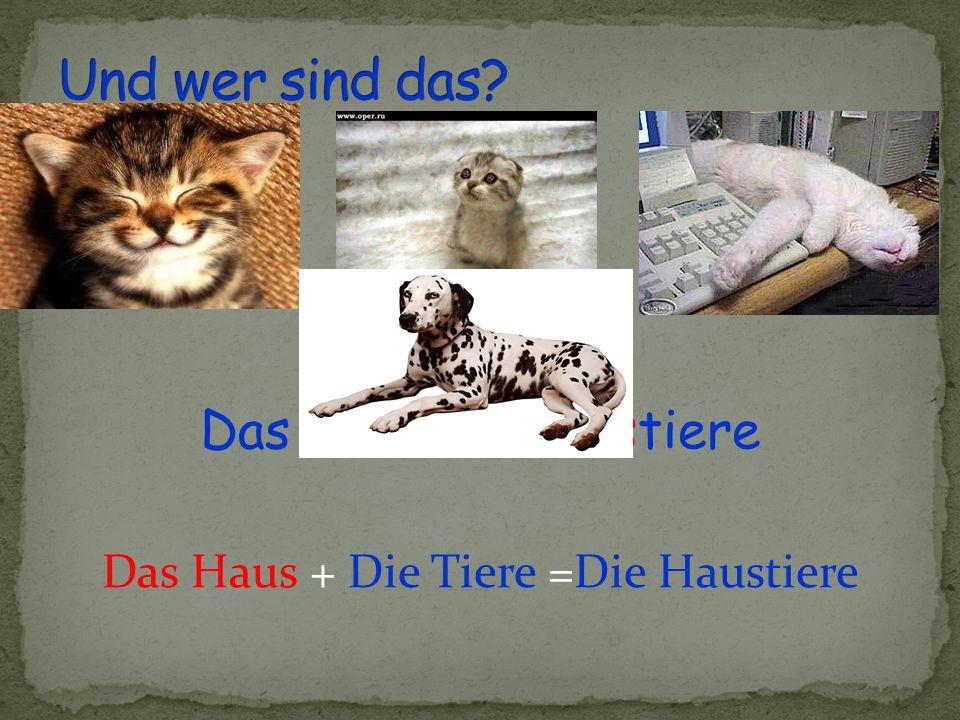 Das sind die Haustiere Das Haus + Die Tiere =Die Haustiere