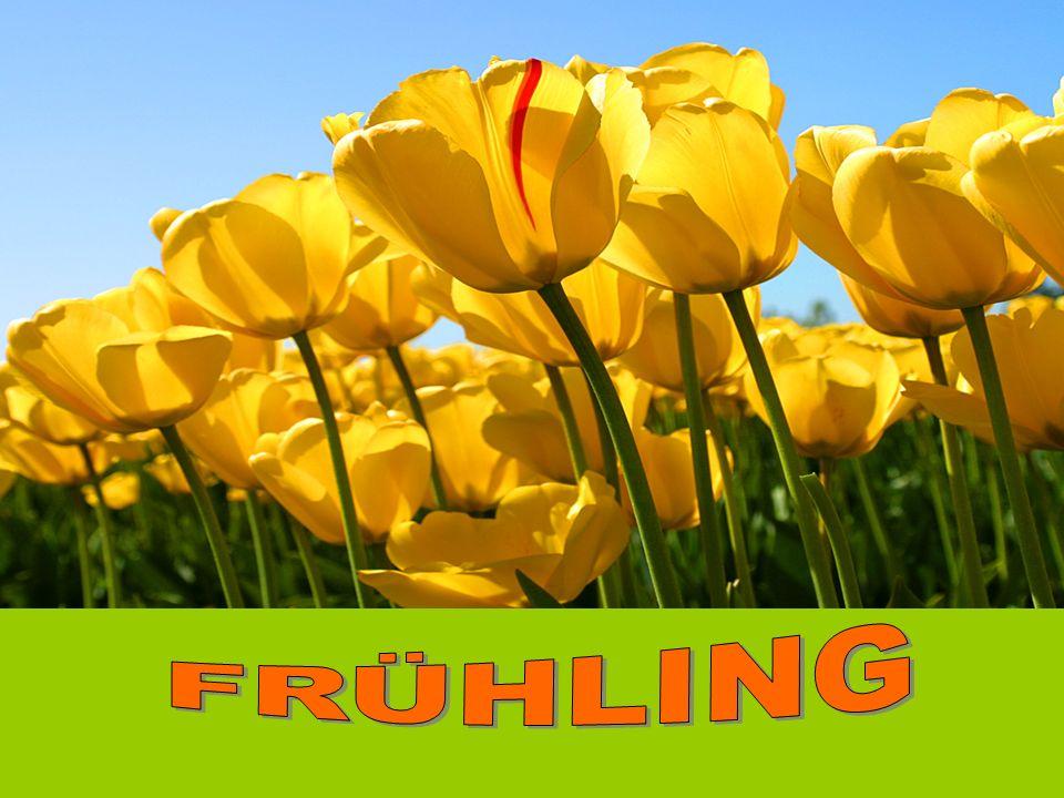 Der Frühling fängt am 21.März an. Der Frühling hat drei Monate.