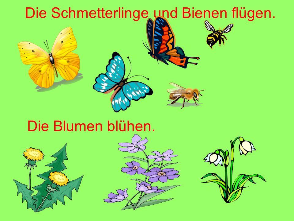 Die Blumen blühen. Die Schmetterlinge und Bienen flügen.