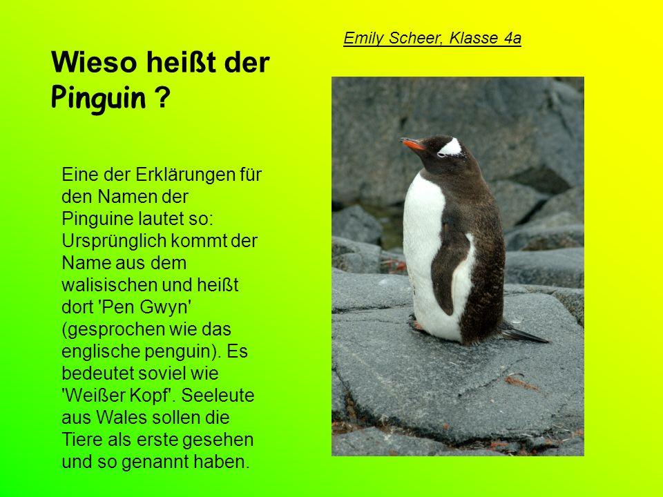 Seit wann gibt es Pinguine.Die Entwicklung der Pinguine begann vor etwa 65 Millionen Jahren.