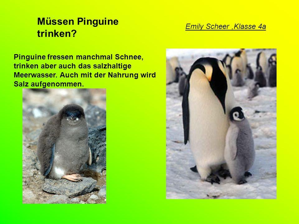 Haben Pinguine Knie.Hähnchen-Keule - der Knick ist das Wie jeder Vogel haben auch Pinguine Knie.