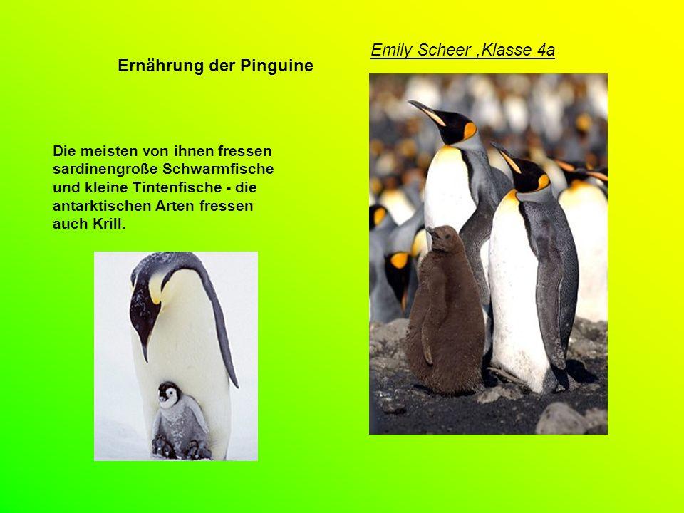 Fotos Pinguinkindergarten Emily Scheer,Klasse 4a