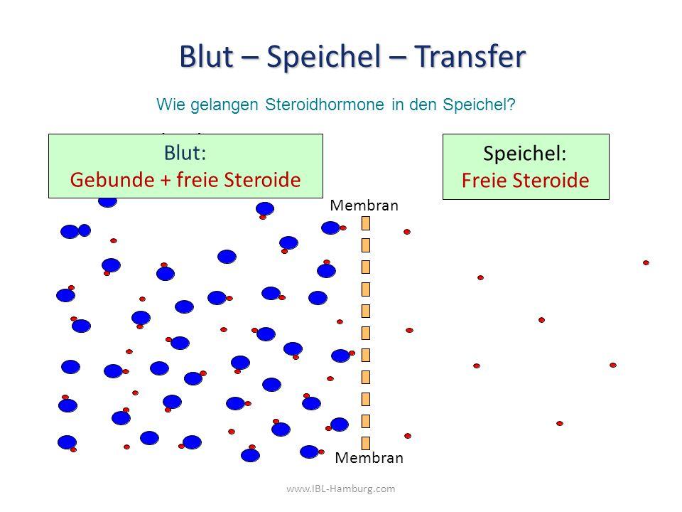 www.IBL-Hamburg.com Speichel: Freie Steroide Blut: Gebunde + freie Steroide Membran Blut – Speichel – Transfer Wie gelangen Steroidhormone in den Speichel?