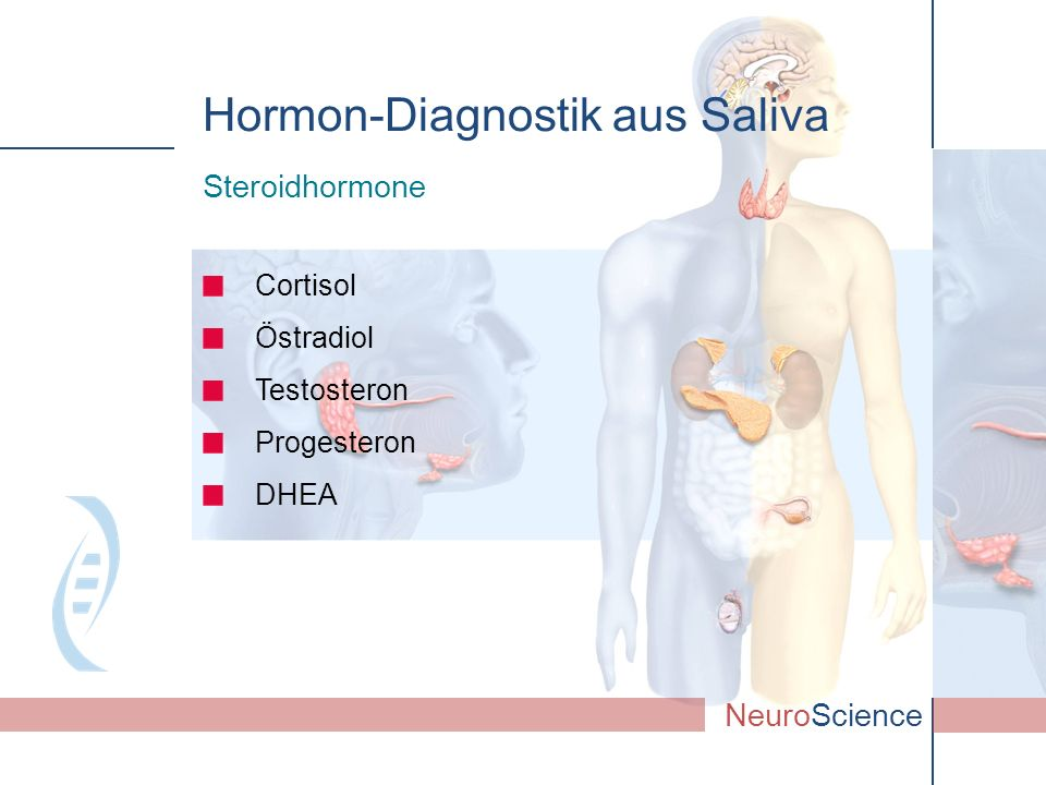 Cortisol Östradiol Testosteron Progesteron DHEA NeuroScience Steroidhormone Hormon-Diagnostik aus Saliva