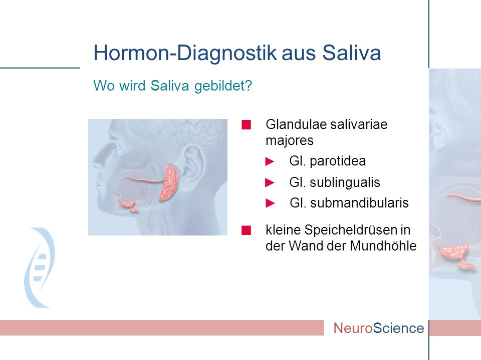 Gl. submandibularis Glandulae salivariae majores Wo wird Saliva gebildet? NeuroScience Gl. parotidea Gl. sublingualis Hormon-Diagnostik aus Saliva kle