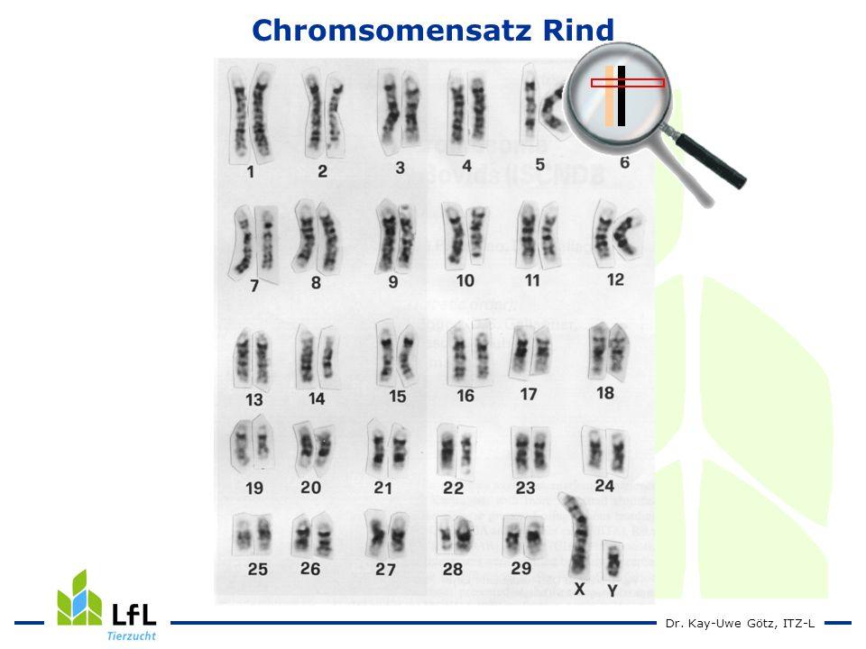 Dr. Kay-Uwe Götz, ITZ-L Chromsomensatz Rind