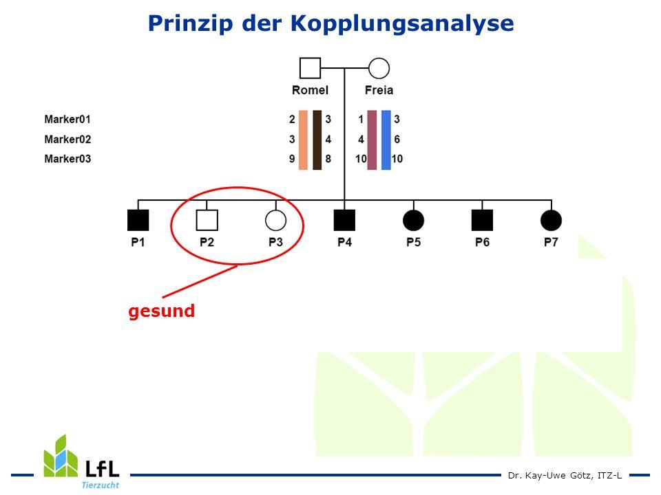 Dr. Kay-Uwe Götz, ITZ-L Prinzip der Kopplungsanalyse gesund