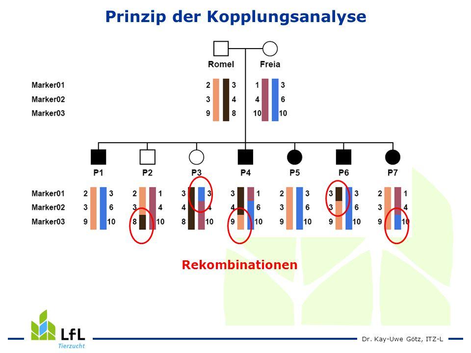 Dr. Kay-Uwe Götz, ITZ-L Prinzip der Kopplungsanalyse Rekombinationen