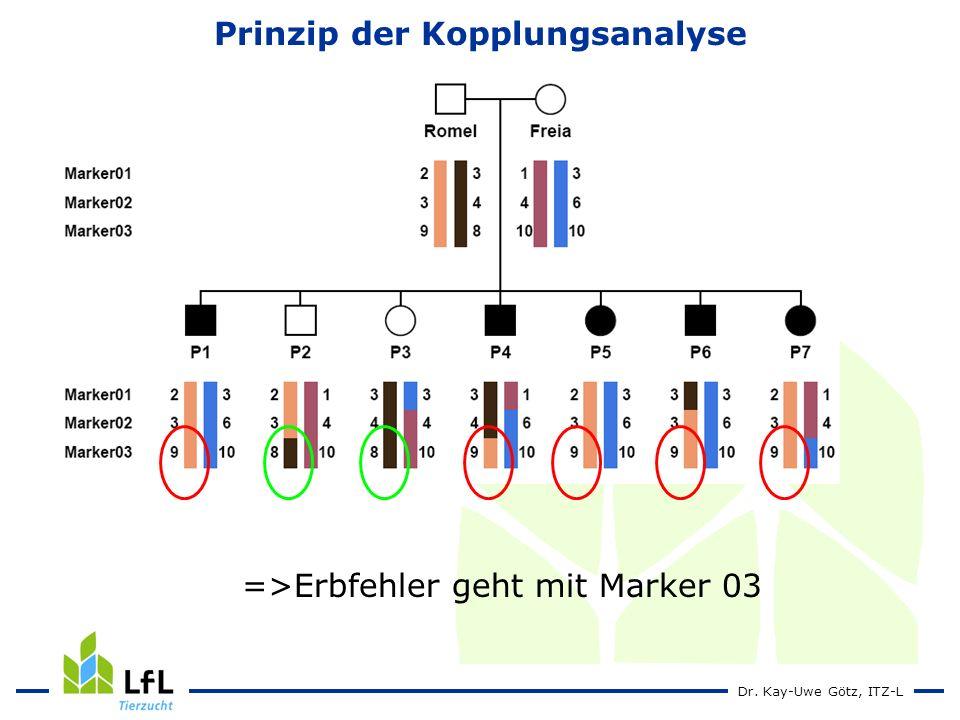 Dr. Kay-Uwe Götz, ITZ-L Prinzip der Kopplungsanalyse =>Erbfehler geht mit Marker 03