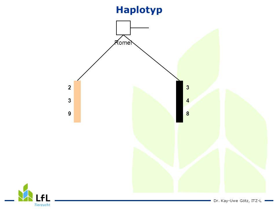 Dr. Kay-Uwe Götz, ITZ-L Romel 239239 348348 Haplotyp