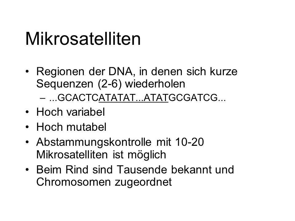 Mikrosatelliten Regionen der DNA, in denen sich kurze Sequenzen (2-6) wiederholen –...GCACTCATATAT...ATATGCGATCG... Hoch variabel Hoch mutabel Abstamm