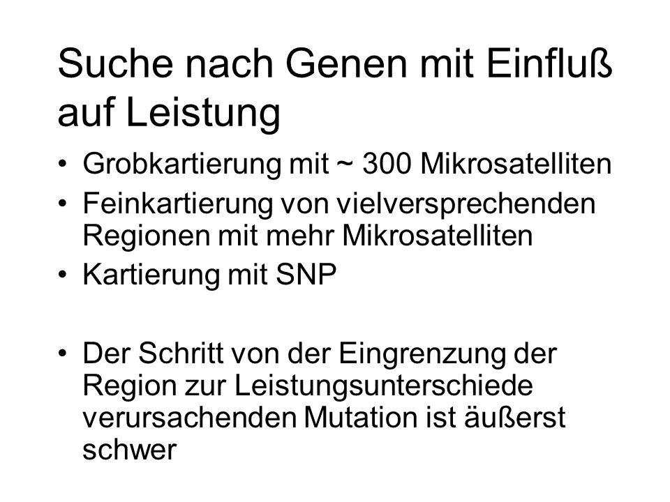 Suche nach Genen mit Einfluß auf Leistung Grobkartierung mit ~ 300 Mikrosatelliten Feinkartierung von vielversprechenden Regionen mit mehr Mikrosatell