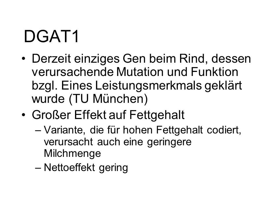 DGAT1 Derzeit einziges Gen beim Rind, dessen verursachende Mutation und Funktion bzgl. Eines Leistungsmerkmals geklärt wurde (TU München) Großer Effek