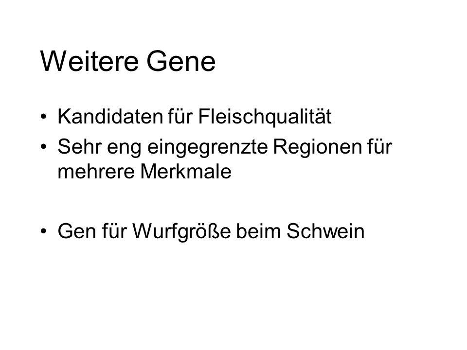 Weitere Gene Kandidaten für Fleischqualität Sehr eng eingegrenzte Regionen für mehrere Merkmale Gen für Wurfgröße beim Schwein