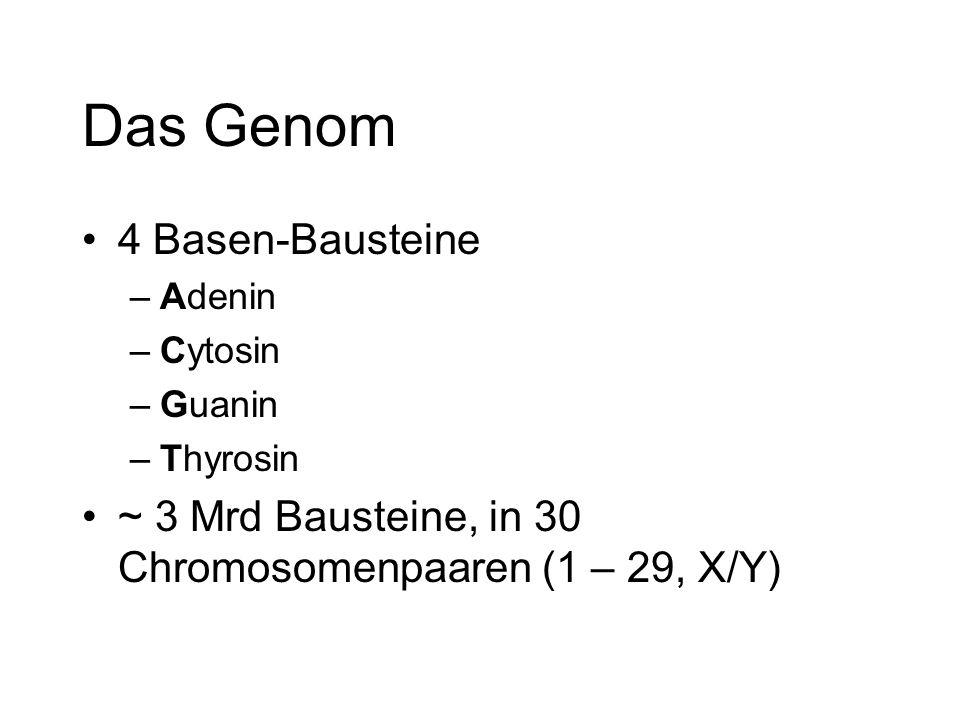 Das Genom 4 Basen-Bausteine –Adenin –Cytosin –Guanin –Thyrosin ~ 3 Mrd Bausteine, in 30 Chromosomenpaaren (1 – 29, X/Y)