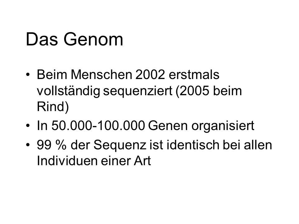 Das Genom Beim Menschen 2002 erstmals vollständig sequenziert (2005 beim Rind) In 50.000-100.000 Genen organisiert 99 % der Sequenz ist identisch bei allen Individuen einer Art