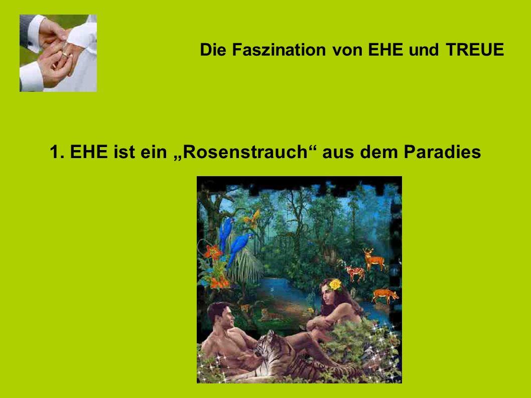 1. EHE ist ein Rosenstrauch aus dem Paradies