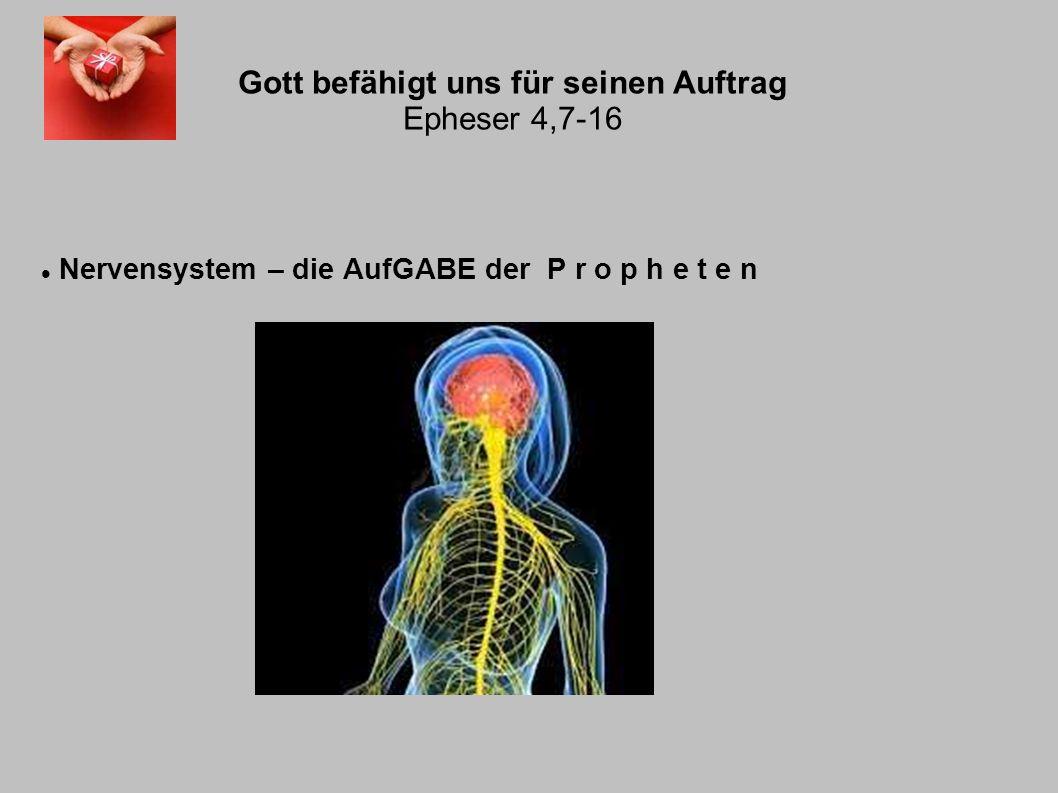 Gott befähigt uns für seinen Auftrag Epheser 4,7-16 Nervensystem – die AufGABE der P r o p h e t e n