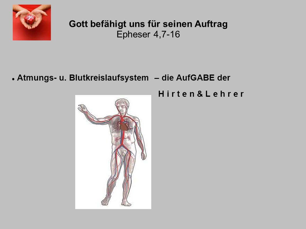Gott befähigt uns für seinen Auftrag Epheser 4,7-16 Atmungs- u. Blutkreislaufsystem – die AufGABE der H i r t e n & L e h r e r