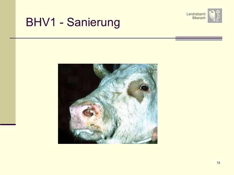 14 BHV1 - Sanierung