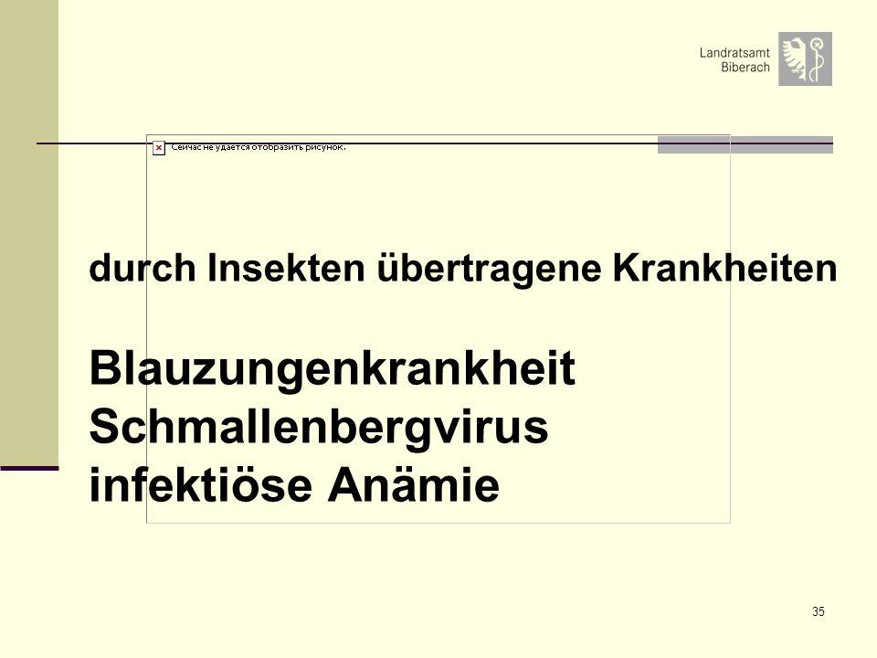 35 durch Insekten übertragene Krankheiten Blauzungenkrankheit Schmallenbergvirus infektiöse Anämie