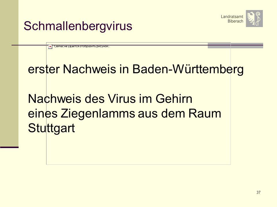 37 Schmallenbergvirus erster Nachweis in Baden-Württemberg Nachweis des Virus im Gehirn eines Ziegenlamms aus dem Raum Stuttgart